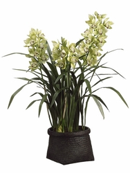 "42"" Cymbidium Orchid Plant in Woven Basket Green"
