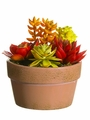 "5.5"" Artificial Succulent Garden in Terra Cotta Pot - Set of 4"