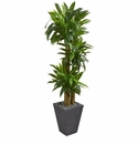 5.5� Cornstalk Dracaena Artificial Plant in Slate Planter (Real Touch) -