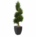 5.5� Cypress Spiral Artificial Tree in Black Wash Planter UV Resistant (Indoor/Outdoor) -