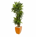 5.5� Dracaena Plant in Orange Square Planter (Real Touch) -