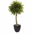 5.5� Ficus Artificial Tree in Black Wash Planter UV Resistant (Indoor/Outdoor) -