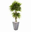 5.5� Mango Artificial Tree in Concrete Planter UV Resistant (Indoor/Outdoor) -