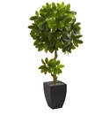 5.5� Schefflera Artificial Tree in Black Wash Planter UV Resistant (Indoor/Outdoor) -
