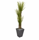 5.5� Triple Stalk Yucca Artificial Plant in Slate Planter -