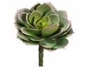 "5.75"" Artificial Cabbage Echeveria Cactus Pick - Set of 12"