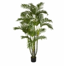 5' Areca Silk Tree