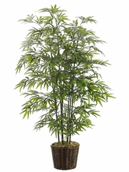 5' BLACK SILK BAMBOO TREE IN WILLOW PLANTER