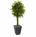 5� Braided Ficus Artificial Tree in Slate Planter UV Resistant (Indoor/Outdoor) -