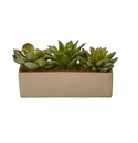 5� Mixed Succulent Pot -