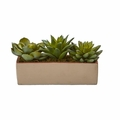 "5"" Mixed Succulent Pot -"