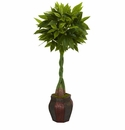 5� Money Artificial Tree in Decorative Planter  -