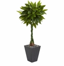5� Money Artificial Tree in Slate Planter (Real Touch) -