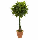 5� Money Artificial Tree in Terracotta Planter (Real Touch)