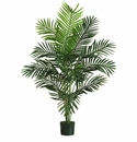 5' Paradise Palm Tree in Plastic Pot