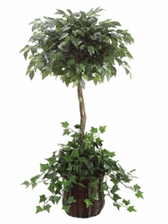 5' SILK FICUS TOPIARY / IVY IN PLANTER