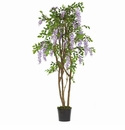 5' Wisteria Silk Tree