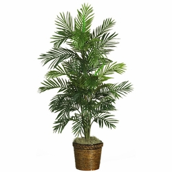 "56"" Areca Palm Silk Tree w/Basket"