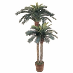 6' & 4' Sago Palm Double Potted Silk Tree