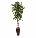 6.5� Ficus w/Decorative Planter