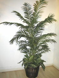 6' ARECA SILK PALM TREE / FERN IN CONTAINER