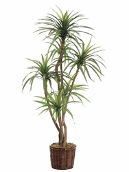 6' ARTIFICIAL YUCCA TREE X 6 STALKS IN PLANTER