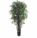 6' Bougainvillea Silk Tree