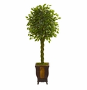 6� Braided Ficus Artificial Tree in Decorative Planter  -
