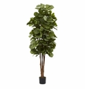 6� Fiddle Leaf Fig Tree