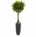 6� Money Artificial Tree in Gray Cylinder Planter (Real Touch)