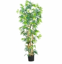 6' Multi Bambusa Bamboo Silk Tree