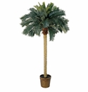 6' Sago Palm Silk Tree