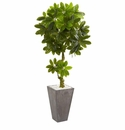 6� Schefflera Artificial Tree in Cement Planter UV Resistant (Indoor/Outdoor) -