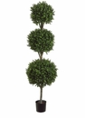 6' Triple Ball-Shaped Boxwood�Topiary in Plastic Pot�