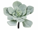 "7.5"" Artificial Echeveria Cactus Pick - Set of 12"