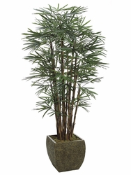 7.5' HONEY LADY SILK PALM TREE IN CONTAINER