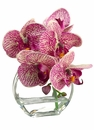 "7"" Artificial Phalaenopsis Orchid Arrangement in Glass Vase - Set of 4"