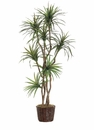 7' ARTIFICIAL YUCCA TREE X 8 STALKS IN PLANTER
