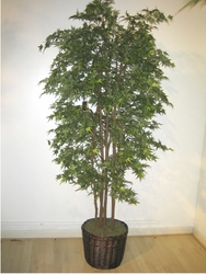7' MINI SILK MAPLE TREE IN PLANTER