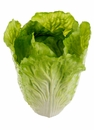 "9"" Artificial Cabbage head - Set of 4"