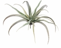 "9"" Artificial Tillandsia Succulent"