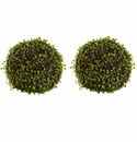 9� Mohlenbechia Ball (Set of 2)