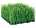 "6"" Artificial Wheat Grass Mat"