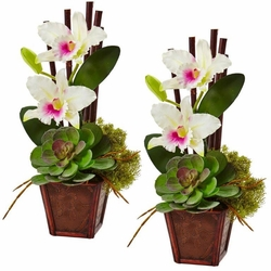 "14.75"" Cattleya Orchid and Succulent Arrangement (Set of 2) - White"