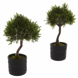 "11.5"" Cedar Bonsai with Planter (Set of 2)"