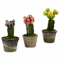 """6-7"""" Artificial Colorful Cactus - Potted (Set of 3)"""