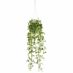 "34"" Green Variegated Wandering Jew Hanging Basket Artificial Plant"