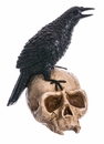 Halloween Special - Crow on Skull