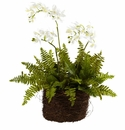 "15"" Mini Phalaenopsis & Fern w/Bridsnest Planter"