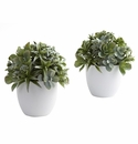 """8"""" Mixed Artificial Succulent with White Planter (Set of 2)"""